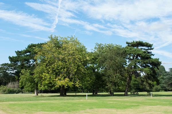 Image of University Parks, green grass, several green trees and blue sky